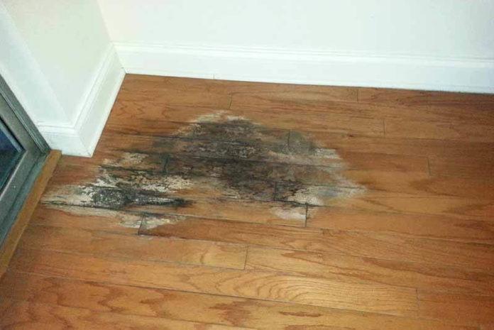 lantai kayu berjamur